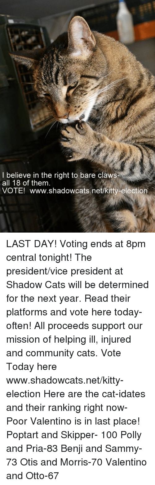 poptarts: I believe in the right to bare claws  all 18 of them  VOTE! www.shadowcats.net/kitty-election LAST DAY! Voting ends at 8pm central tonight! The president/vice president at Shadow Cats will be determined for the next year. Read their platforms and vote here today- often! All proceeds support our mission of helping ill, injured and community cats.  Vote Today here www.shadowcats.net/kitty-election   Here are the cat-idates and their ranking right now- Poor Valentino is in last place!  Poptart and Skipper- 100  Polly and Pria-83  Benji and Sammy- 73  Otis and Morris-70  Valentino and Otto-67