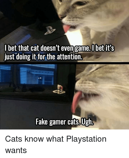 Bet That: I bet that cat doesn't even game.Ubet it's  just doing it for the attention.  Fake gamer cats, Ugh Cats know what Playstation wants