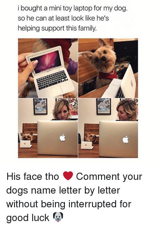 Dogs, Family, and Girl: i bought a mini toy laptop for my dog.  so he can at least look like he's  helping support this family. His face tho ❤️ Comment your dogs name letter by letter without being interrupted for good luck 🐶