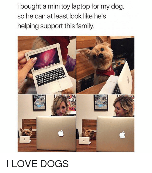 Dogs, Family, and Ironic: i bought a mini toy laptop for my dog  so he can at least look like he's  helping support this family. I LOVE DOGS