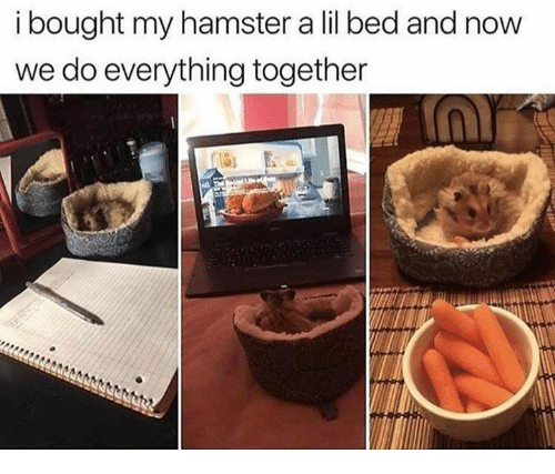 Hamster, Now, and Lil: i bought my hamster a lil bed and now  we do everything together