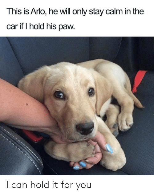 Hold It: I can hold it for you