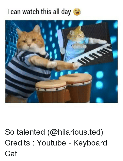 Funny, Ted, and Keyboard: I can watch this all day So talented (@hilarious.ted) Credits : Youtube - Keyboard Cat