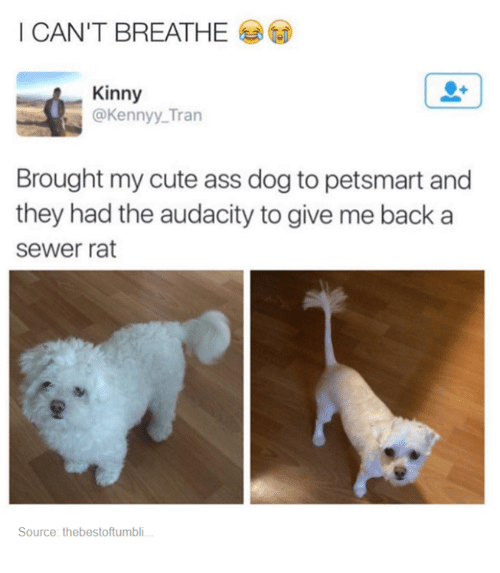 sewer rat: I CAN'T BREATHE  Kinny  @Kenny Tran  Brought my cute ass dog to petsmart and  they had the audacity to give me back a  sewer rat  Source: thebestoftumbli