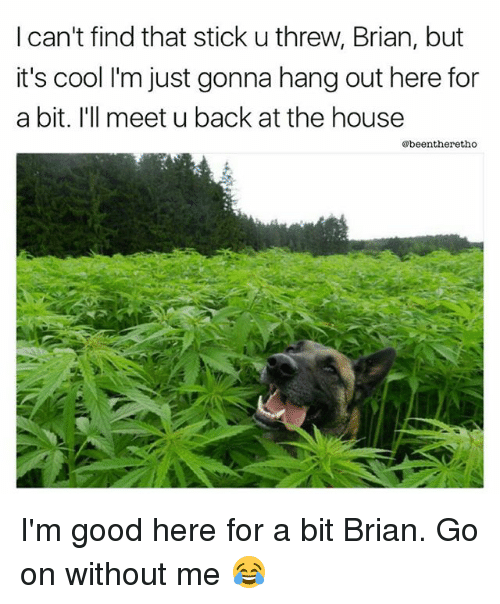 Threws: I can't find that stick u threw, Brian, but  it's cool I'm just gonna hang out here for  a bit. I'll meet u back at the house  @beentheretho I'm good here for a bit Brian. Go on without me 😂