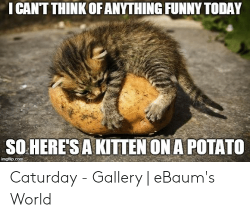 Caturday Meme: I CANTTHINK OFANYTHING FUNNY TODAY  SOHERE'S A KITTEN ON A POTATO Caturday - Gallery | eBaum's World