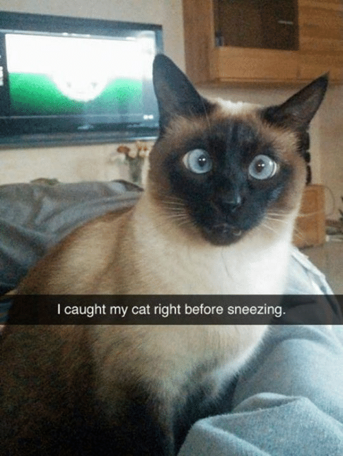 Caught My: I caught my cat right before sneezing