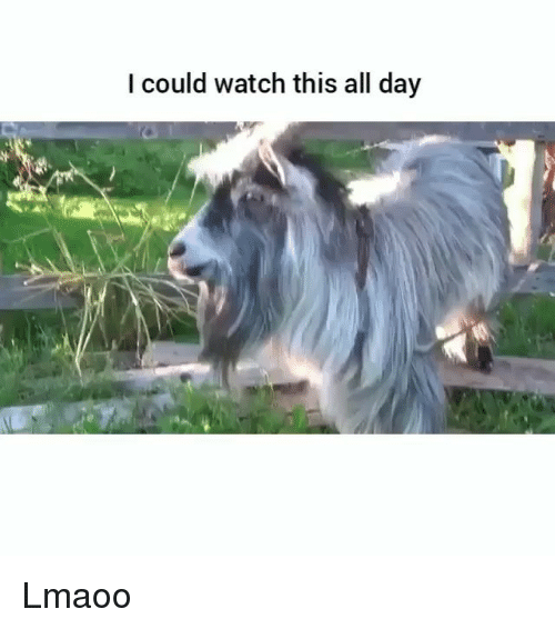 Funny, Watch, and Day: I could watch this all day Lmaoo
