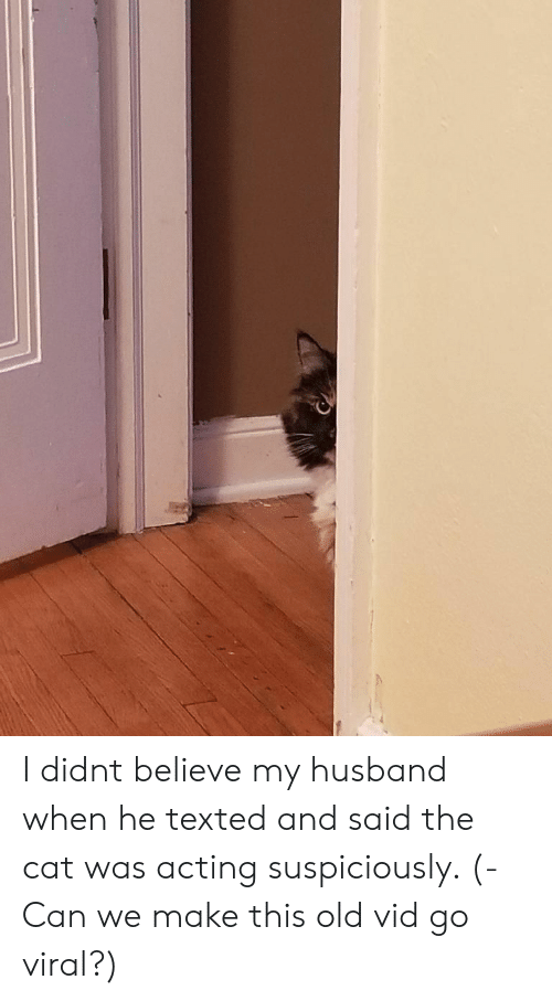 Husband, Old, and Acting: I didnt believe my husband when he texted and said the cat was acting suspiciously. (- Can we make this old vid go viral?)