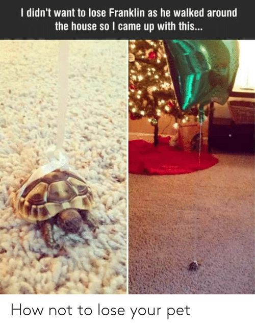 Franklin: I didn't want to lose Franklin as he walked around  the house so I came up with this... How not to lose your pet