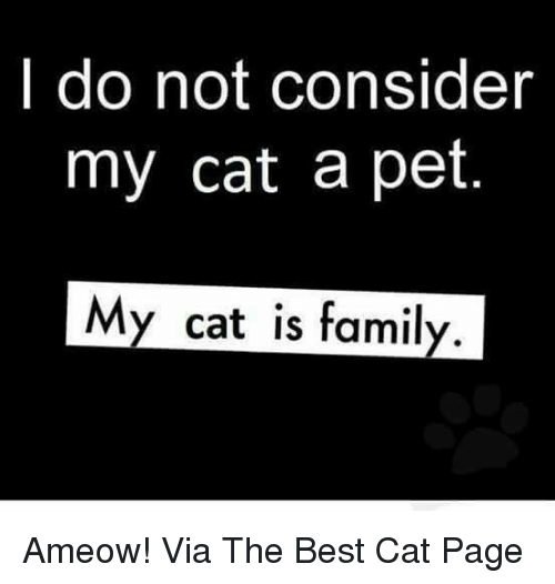 Memes, Best Cat, and 🤖: I do not consider  my cat a pet.  My cat is family Ameow! Via The Best Cat Page