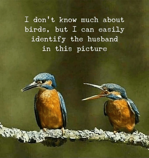 Birds, Husband, and Can: I don' t know much about  birds, but I can easily  identify the husband  in this picture