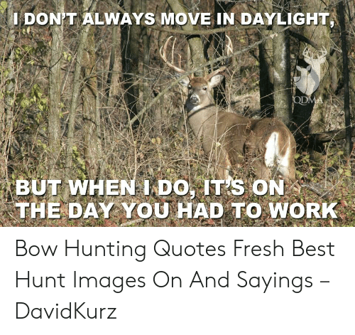 🐣 25+ Best Memes About Bow Hunting Quotes | Bow Hunting ...