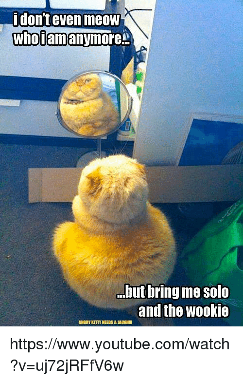 Wooki: i don't even meow  anymore  Who am  but bring me Solo  and the Wookie  ANGRYNTTYNEEDSALAUGHII https://www.youtube.com/watch?v=uj72jRFfV6w