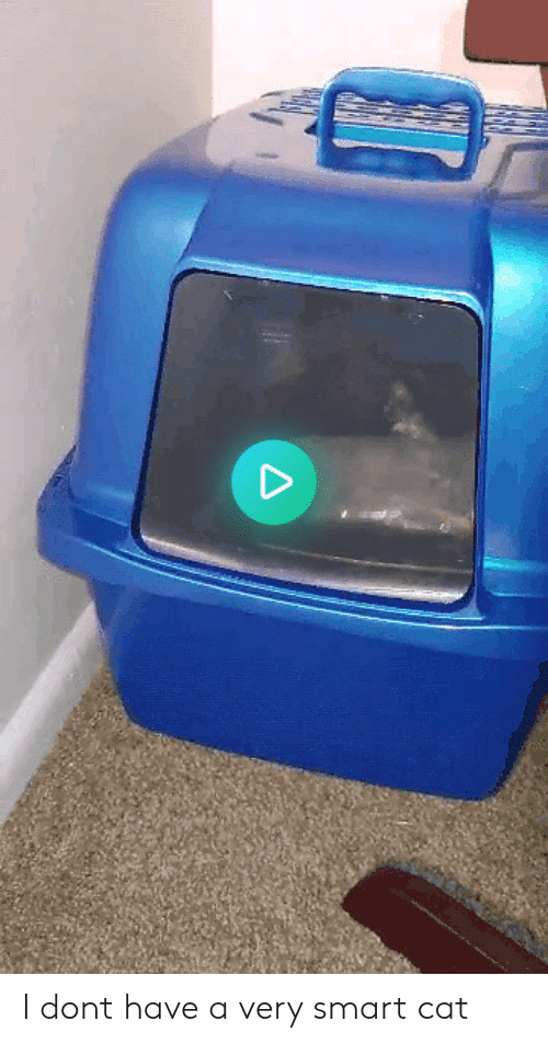 Smart Cat: I dont have a very smart cat