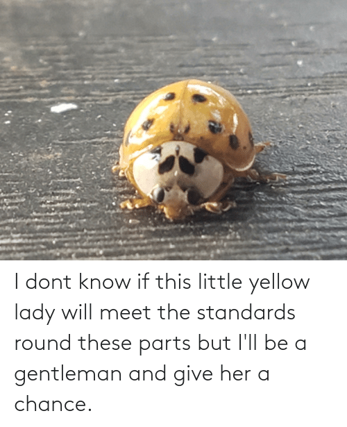give her: I dont know if this little yellow lady will meet the standards round these parts but I'll be a gentleman and give her a chance.