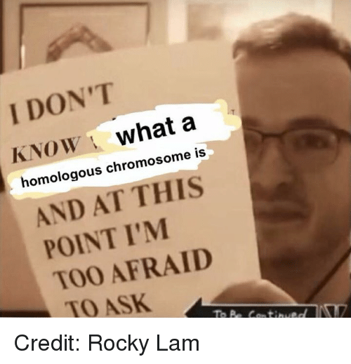 Too Afraid To Ask: I DON'T  KNOW what a  homologous chromosome is  AND AT THIS  POINT I'M  TOO AFRAID  TO ASK Credit: Rocky Lam