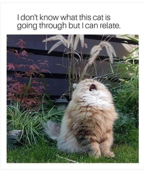 Memes, 🤖, and Cat: I don't know what this cat is  going through but I can relate.
