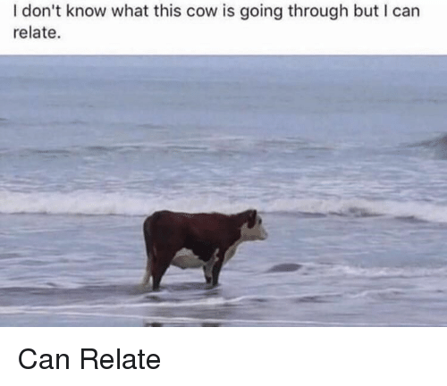 Cow, Can, and What: I don't know what this cow is going through but I can  relate. Can Relate