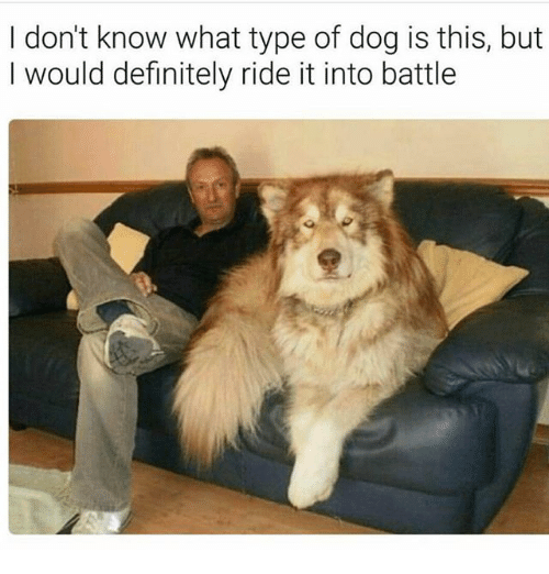 Definitely, Memes, and 🤖: I don't know what type of dog is this, but  I would definitely ride it into battle