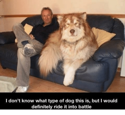 Memes, 🤖, and Types of Dogs: I don't know what type of dog this is, but I would  definitely ride it into battle