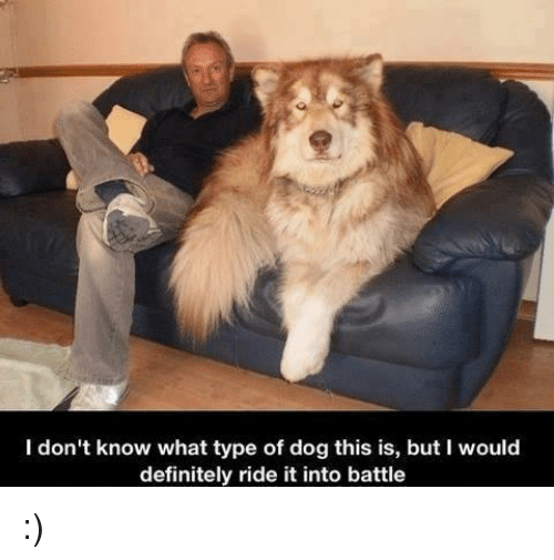 Definitely, Memes, and 🤖: I don't know what type of dog this is, but I would  definitely ride it into battle :)