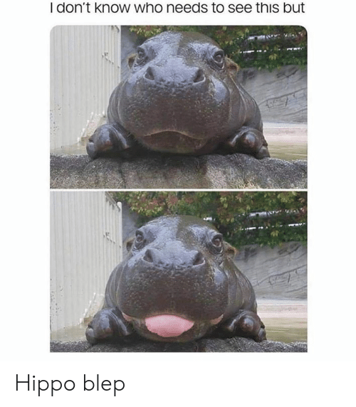 hippo: I don't know who needs to see this but Hippo blep