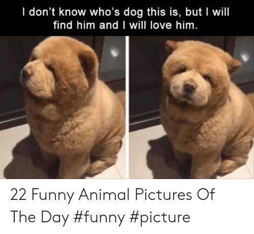 Find Him: I don't know who's dog this is, but I will  find him and I will love him 22 Funny Animal Pictures Of The Day #funny #picture