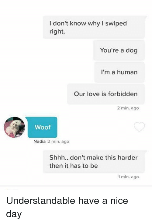 Love, Dank Memes, and Nice: I don't know why I swiped  right.  You're a dog  I'm a human  Our love is forbidden  2 min. ago  Woof  Nadia 2 min. ago  Shhh.. don't make this harder  then it has to be  1 min. ago Understandable have a nice day