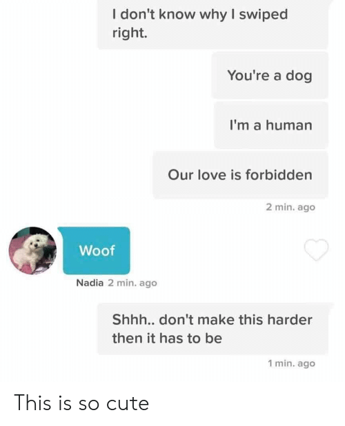 Cute, Love, and Dog: I don't know why I swiped  right.  You're a dog  I'm a human  Our love is forbidden  2 min. ago  Woof  Nadia 2 min. ago  Shh... don't make this harder  then it has to be  1 min. ago This is so cute