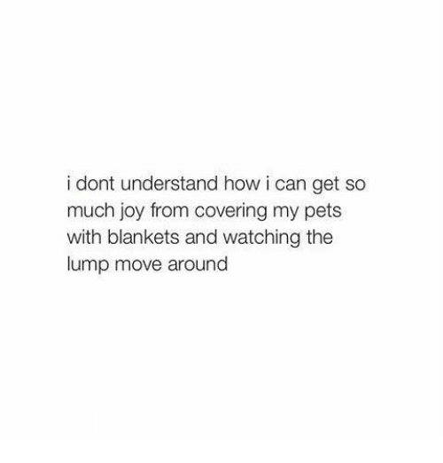 Memes, Pets, and 🤖: i dont understand how i can get so  much joy from covering my pets  with blankets and watching the  lump move around