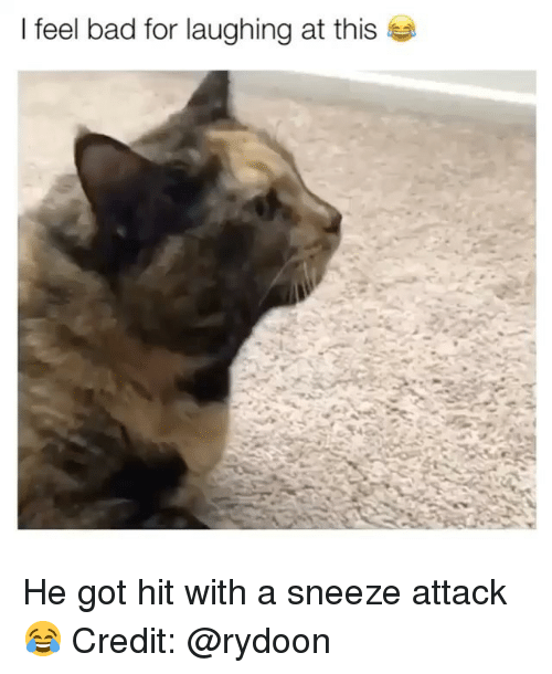 A Sneeze: I feel bad for laughing at this He got hit with a sneeze attack 😂 Credit: @rydoon