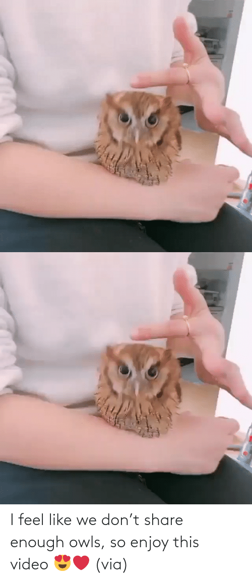 share: I feel like we don't share enough owls, so enjoy this video 😍❤️ (via)