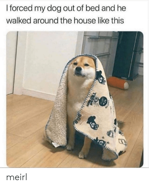 House, MeIRL, and Dog: I forced my dog out of bed and he  walked around the house like this  NEW  LATT  THE meirl