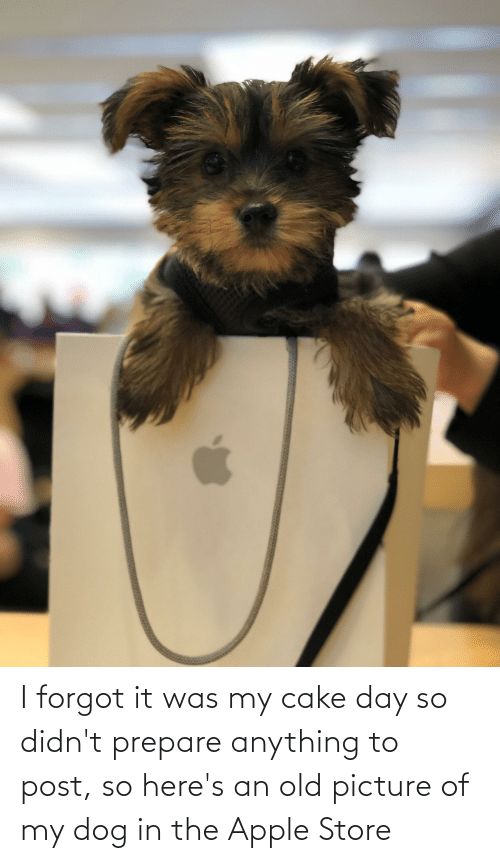 Apple Store: I forgot it was my cake day so didn't prepare anything to post, so here's an old picture of my dog in the Apple Store