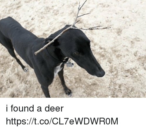 Deer, Girl Memes, and Found: i found a deer https://t.co/CL7eWDWR0M