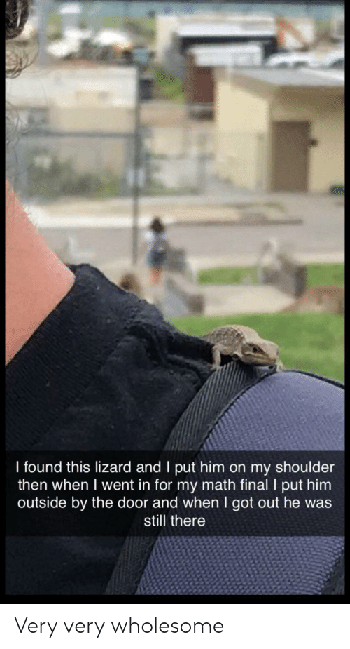 Math, Wholesome, and Got: I found this lizard and I put him on my shoulder  then when I went in for my math final I put him  outside by the door and when I got out he was  still there Very very wholesome
