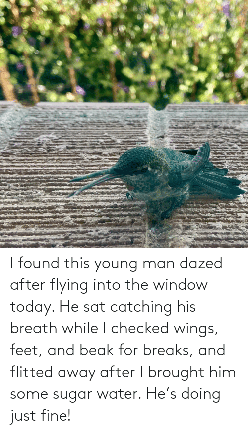 sat: I found this young man dazed after flying into the window today. He sat catching his breath while I checked wings, feet, and beak for breaks, and flitted away after I brought him some sugar water. He's doing just fine!
