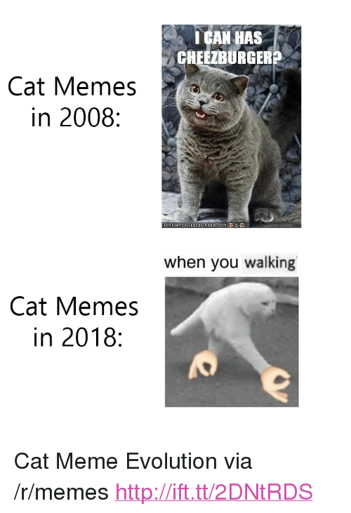"cat meme: I GAN HAS  CHEEZBURGERS  Cat Memes  in 2008:  CANHASCHEE2BURGER.COM  when you walking  Cat Memes  in 2018: <p>Cat Meme Evolution via /r/memes <a href=""http://ift.tt/2DNtRDS"">http://ift.tt/2DNtRDS</a></p>"