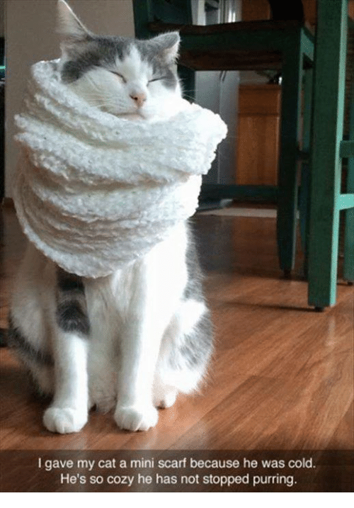 Cold, Humans of Tumblr, and Cat: I gave my cat a mini scarf because he was cold  He's so cozy he has not stopped purring