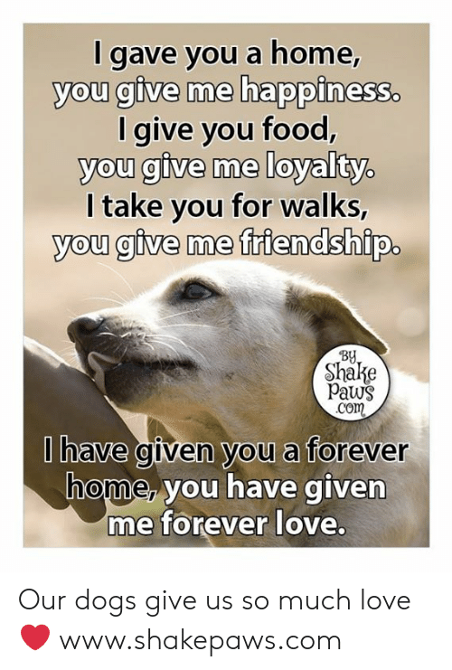Paws: I gave you a home,  you give me happiness.  I give you food,  you give me loyalty.  I take you for walks,  you give me friendship.  By  Shake  Paws  Com  Ihave given you a forever  home, you have given  me forever love. Our dogs give us so much love ❤️ www.shakepaws.com