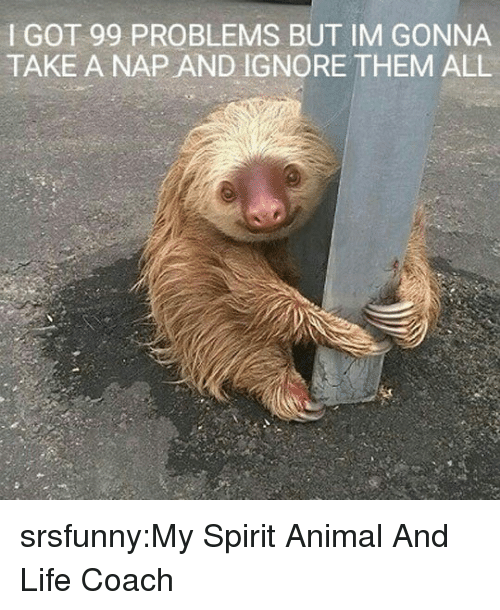 Got 99 Problems: I GOT 99 PROBLEMS BUT IM GONNA  TAKE A NAP AND IGNORE THEM ALL srsfunny:My Spirit Animal And Life Coach