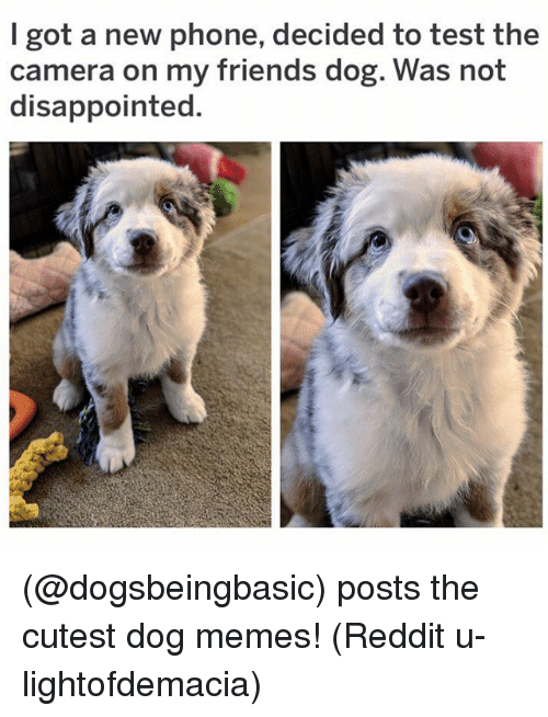Memes Reddit: I got a new phone, decided to test the  camera on my friends dog. Was not  disappointed. (@dogsbeingbasic) posts the cutest dog memes! (Reddit u-lightofdemacia)