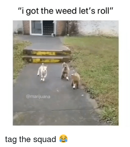 """Lets Roll, Squad, and Weed: """"i got the weed let's roll""""  @marijuana tag the squad 😂"""
