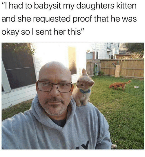 "Memes, Okay, and 🤖: ""I had to babysit my daughters kitten  and she requested proof that he was  okay sol sent her this"""