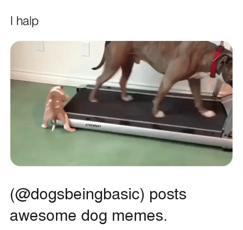 Memes, Awesome, and 🤖: I halp (@dogsbeingbasic) posts awesome dog memes.