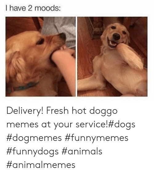Doggo Memes: I have 2 moods: Delivery! Fresh hot doggo memes at your service!#dogs #dogmemes #funnymemes #funnydogs #animals #animalmemes