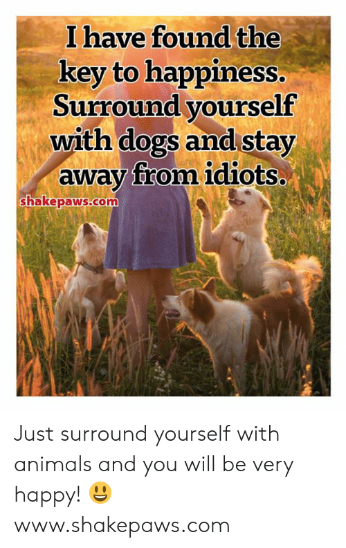 Animals, Dogs, and Memes: I have found the  key to happiness.  Surround yourself  with dogs and stay  away from idiots..  shakepaws.com Just surround yourself with animals and you will be very happy! 😃 www.shakepaws.com
