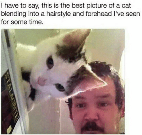 hairstyle: I have to say, this is the best picture of a cat  blending into a hairstyle and forehead I've seen  for some time.