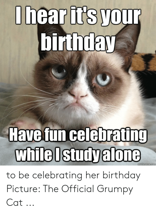 Official Grumpy: I hear its your  birthday  ave fun celebrating  while I study alone to be celebrating her birthday Picture: The Official Grumpy Cat ...